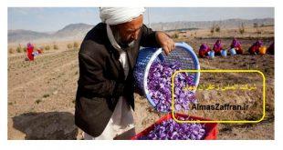 آموزششقیمت زعفران نگین صادراتی در سال 1398 رایگان کشت پیاز زعفران