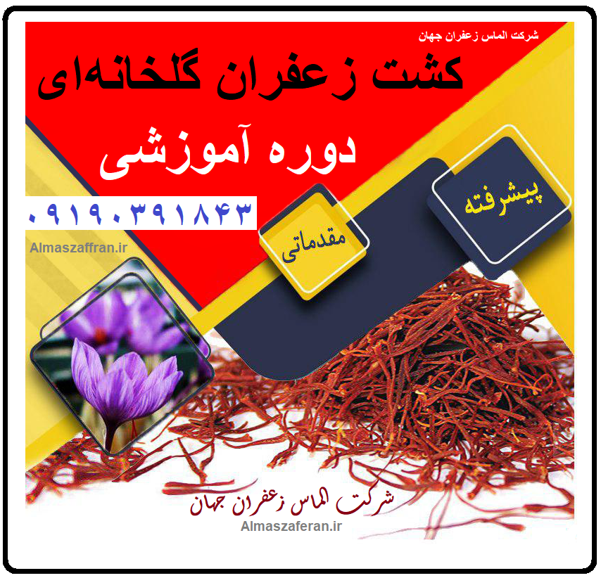 آموزش رایگان کاشت زعفران گلخانه ای