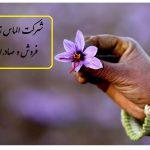 شناخت گیاه زعفران