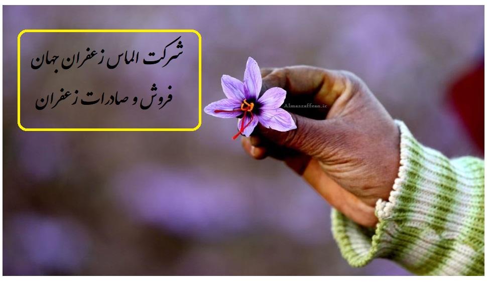 کتش زعفران گلخانهای و قیمت زعفران