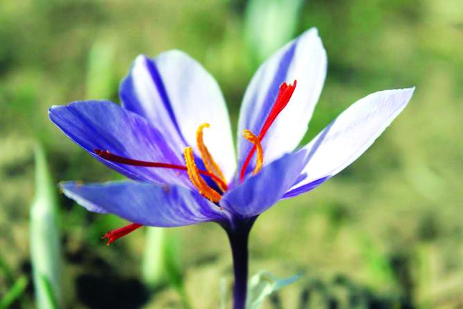 زعفران درجه یک صادراتی