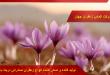 مصرف زعفران در کشورهای مختلف جهان چگونه است؟