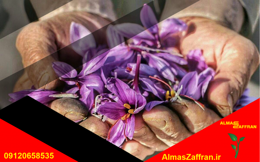 نمایندگی فروش زعفران قائنات در تهران