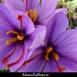برخی از شرایط صادرات زعفران به کویت