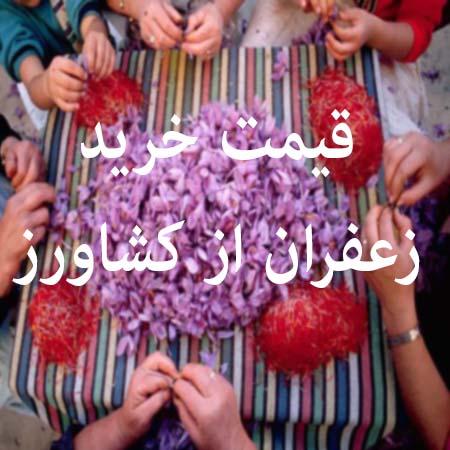 قیمت خرید زعفران از کشاورز امسال
